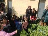 El colegio Cervantes de Molina de Segura gana el premio nacional al mejor huerto escolar ecológico