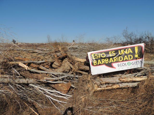 Denuncian la destrucción de una alameda en la Gurulla - 1, Foto 1