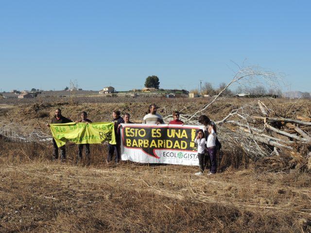 Denuncian la destrucción de una alameda en la Gurulla - 2, Foto 2
