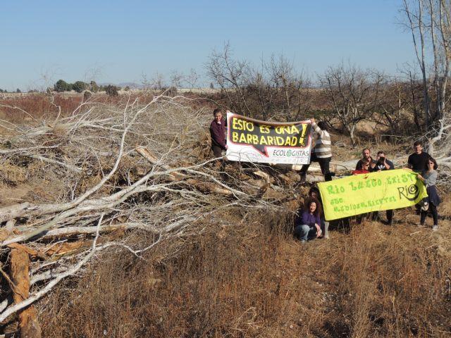 Denuncian la destrucción de una alameda en la Gurulla - 4, Foto 4
