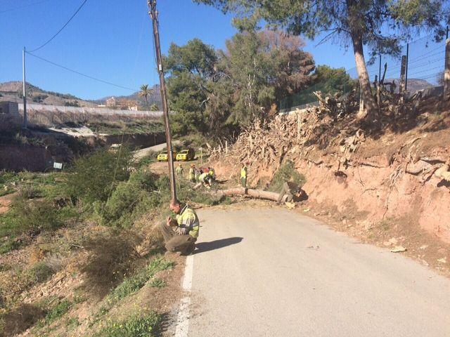 Protección Civil y la Brigada Forestal limpian el arbolado que ocupaba la vía en el Camino de los Mortolitos - 1, Foto 1