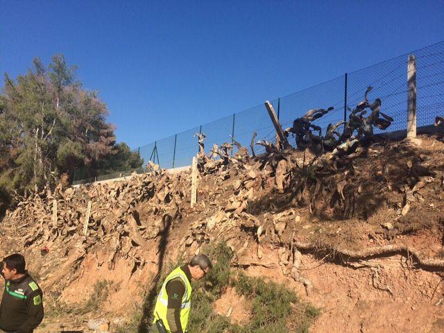 Protección Civil y la Brigada Forestal limpian el arbolado que ocupaba la vía en el Camino de los Mortolitos - 2, Foto 2