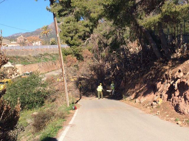 Protección Civil y la Brigada Forestal limpian el arbolado que ocupaba la vía en el Camino de los Mortolitos - 3, Foto 3
