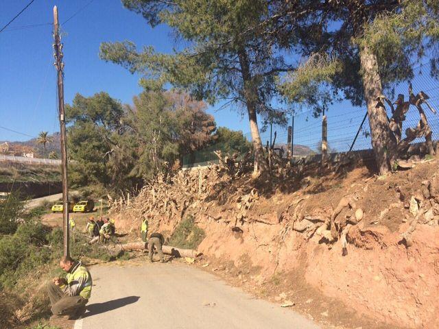 Protección Civil y la Brigada Forestal limpian el arbolado que ocupaba la vía en el Camino de los Mortolitos - 5, Foto 5