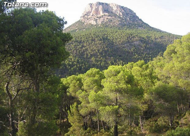 Solicitan que la futura Oficina Comarcal Forestal se instale en Totana - 1, Foto 1