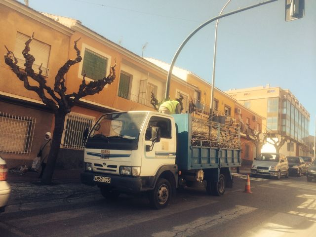 Begin work pruning of mulberry trees on public roads and parks and gardens