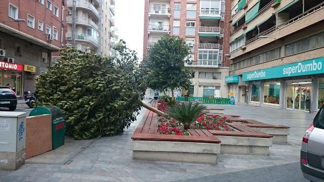 Policía Local  y Bomberos intervienen en caídas de ramas y árboles por el viento - 1, Foto 1