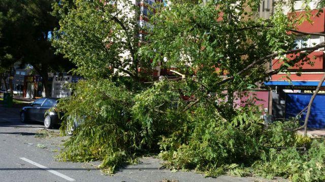 Policía Local  y Bomberos intervienen en caídas de ramas y árboles por el viento - 2, Foto 2