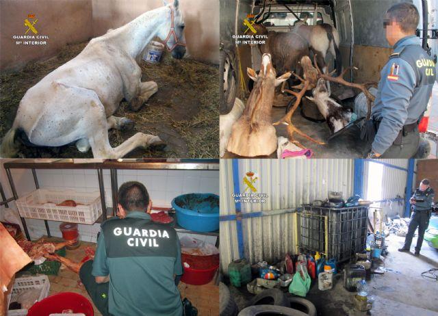 El SEPRONA de la Guardia Civil detuvo o imputó en el año 2014 a 42 personas por delitos contra el medio ambiente, fauna y flora