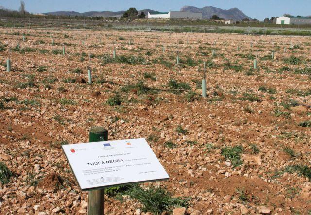La finca experimental 'Las Nogueras' de Caravaca fomenta los nuevos cultivos alternativos a los tradicionales de la comarca - 3, Foto 3