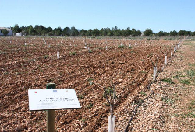 La finca experimental 'Las Nogueras' de Caravaca fomenta los nuevos cultivos alternativos a los tradicionales de la comarca - 4, Foto 4