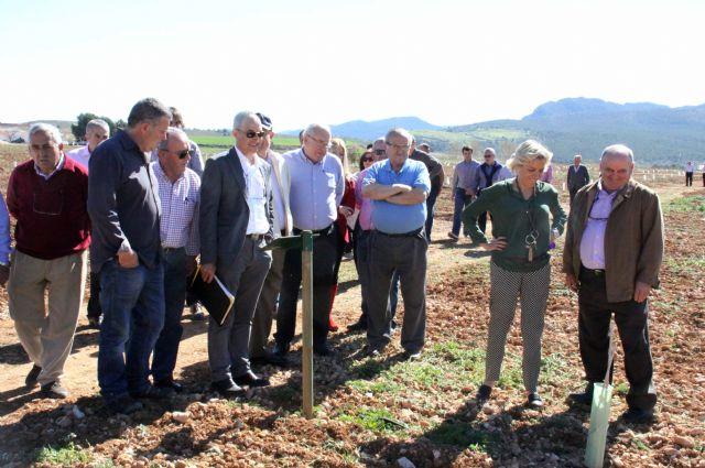 La finca experimental 'Las Nogueras' de Caravaca fomenta los nuevos cultivos alternativos a los tradicionales de la comarca - 1, Foto 1