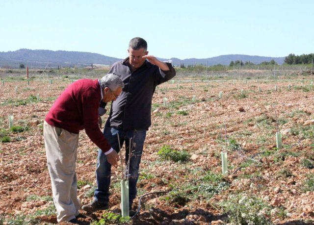 La finca experimental 'Las Nogueras' de Caravaca fomenta los nuevos cultivos alternativos a los tradicionales de la comarca - 2, Foto 2