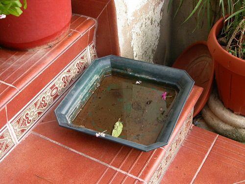 La Concejalía de Salud Pública procede a la instalación de trampas de captura para comprobar la presencia o ausencia del mosquito tigre en Totana - 2, Foto 2