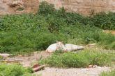 Sanidad pide a Cuatro Gatos un plan de gestión de las colonias de felinos
