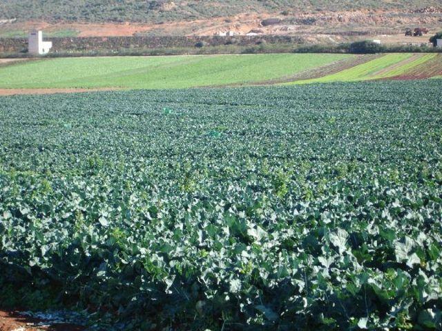 Los agricultores de Puerto Lumbreras podrán usar 100.000 metros cúbicos anuales de agua de lluvia - 1, Foto 1