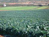 Los agricultores de Puerto Lumbreras podrán usar 100.000 metros cúbicos anuales de agua de lluvia