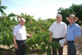 Agricultura presenta las primeras 13 preselecciones de cerezo obtenidas del programa de mejora genética