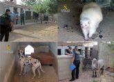 La Guardia Civil detecta la tenencia irregular de medio centenar de animales en un corral doméstico de Murcia