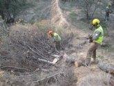 Refuerzan la inversi�n en la lucha contra la plaga de perforadores que afecta a las masas de pinar de la Regi�n