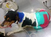 La Guardia Civil detiene a una persona por la muerte violenta de un perro