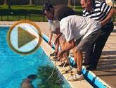 Denuncian actos vandálicos en las piscinas del Complejo Deportivo 'Guadalentín' de la pedanía de El Paretón-Cantareros