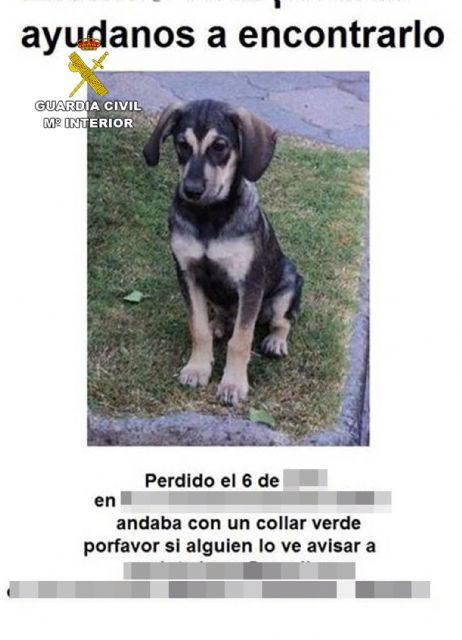 La Guardia Civil detiene a nueve personas por estafas a propietarios de mascotas extraviadas - 1, Foto 1