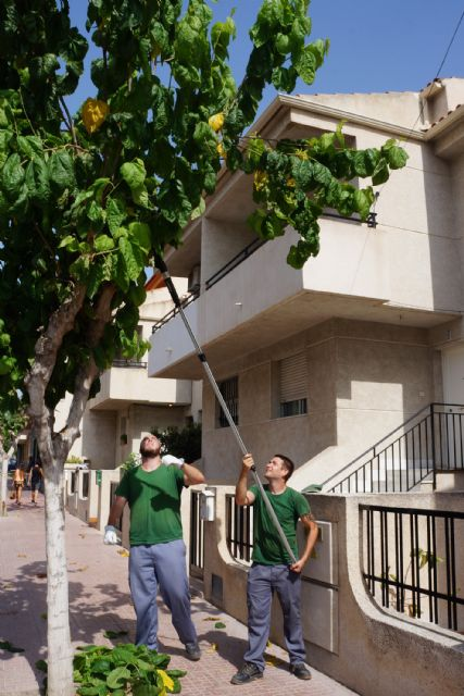 Los alumnos del programa de empleo y formación juvenil sobre jardinería y agricultura colaboran en las podas municipales - 3, Foto 3