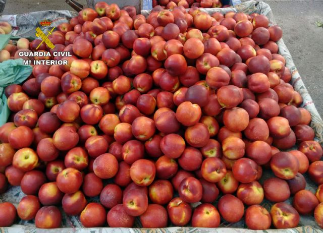 La Guardia Civil desmantela un grupo delictivo dedicado a la sustracción de fruta, en Cieza - 1, Foto 1