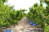 Logran incrementar los antioxidantes y el dulzor cultivando nectarina extratemprana con un 40% menos de agua