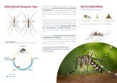 Una ordenanza municipal informa sobre c�mo prevenir la incidencia del mosquito tigre