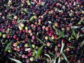 El Panel Oficial de Catadores de aceite de oliva virgen de la Región pasa con éxito la auditoría de seguimiento de la ENAC
