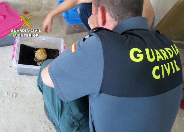 La Guardia Civil destapa una trama dedicada a la comercialización irregular de animales exóticos - 3, Foto 3