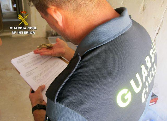 La Guardia Civil destapa una trama dedicada a la comercialización irregular de animales exóticos - 5, Foto 5