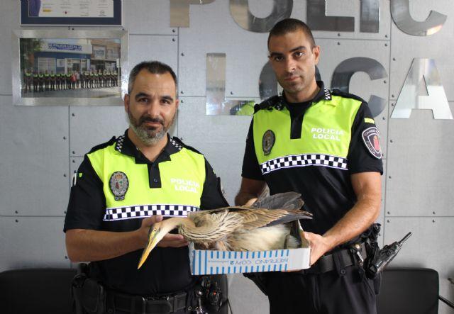 La Policía Local de Puerto Lumbreras rescata una garza imperial - 1, Foto 1