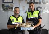La Policía Local de Puerto Lumbreras rescata una garza imperial