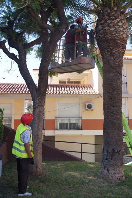Realizan un plan de poda y mantenimiento de las palmeras en los parques y jardines de Totana - 2, Foto 2