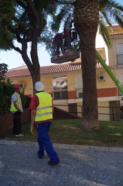 Realizan un plan de poda y mantenimiento de las palmeras en los parques y jardines de Totana - 3, Foto 3