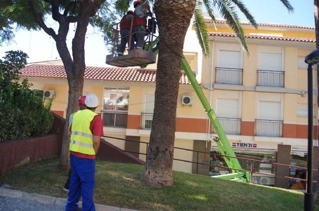 Realizan un plan de poda y mantenimiento de las palmeras en los parques y jardines de Totana - 4, Foto 4