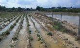 El Ayuntamiento de Ceutí pedirá una indemnización a la CHS por la inundación en Los Torraos