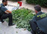 La Guardia Civil desmantela un invernadero clandestino de marihuana en La Matanza de Santomera