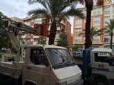 Finalizan los trabajos del plan de poda y mantenimiento de las palmeras en los parques y jardines de Totana