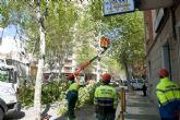 Jardines talará 17 árboles de la calle Príncipe de Asturias con peligro de caída