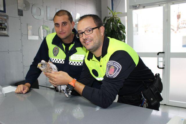 La Policía Local de Puerto Lumbreras rescata a un cernícalo herido - 1, Foto 1