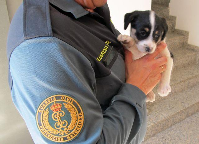 La Guardia Civil imputa a dos personas el abandono de un cachorro de perro - 1, Foto 1
