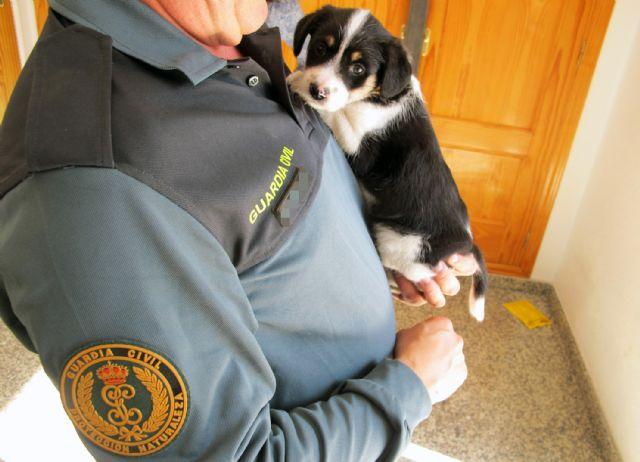 La Guardia Civil imputa a dos personas el abandono de un cachorro de perro - 2, Foto 2