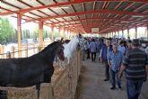 Puerto Lumbreras acogerá este fin de semana la tradicional Feria de Ganado Equino 2015