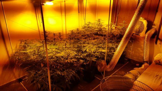La Policía Local de Alhama descubre una plantación de marihuana, Foto 3