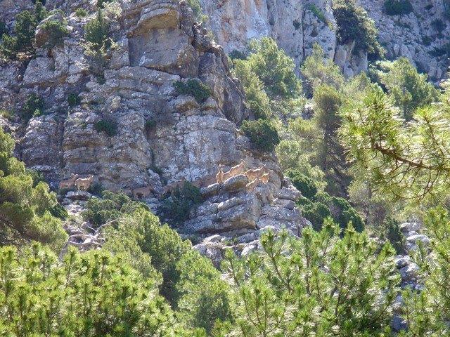 APESE y COAG piden que desaparezca la reserva de caza del arrui de Sierra Espuña, Foto 2