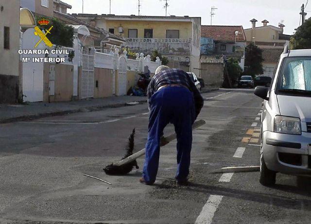 La Guardia Civil esclarece un delito de maltrato animal en el que un gato fue apaleado en plena calle - 1, Foto 1